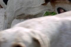 nocrop1440schleppjagd_2007_20110823_1536864434